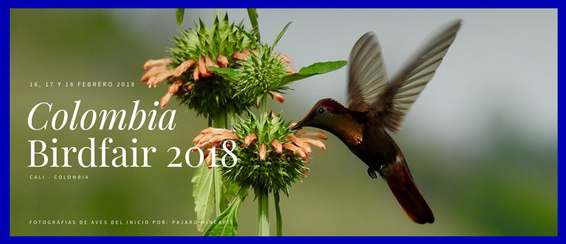 Colombia BirdFair 2018